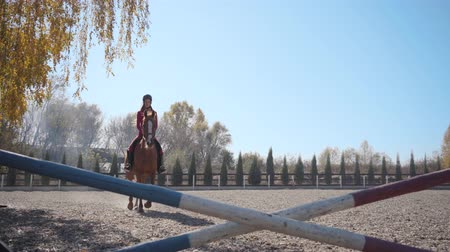 規律 : Young brunette Caucasian girl in pink clothes and horse riding helmet jumps the barrier on brown graceful horse and riding away from the shot. Professional female equestrian training outdoors. 動画素材