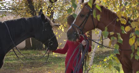 juba : Caucasian female equestrian holding bridles of two horses and looking away. Young girl in pink clothes spending sunny autumn day in the forest with animals. Cinema 4k footage ProRes HQ.