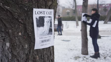 отчаянный : Blurred Caucasian woman hanging missing cat ads on trees, one advertisement is on the foreground. Young girl searching for lost pet. Loss, despair, search. Focus on the foreground.