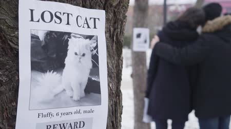 brochura : Close-up of lost cat ad hanging on the tree as two blurred Caucasian people hugging at the background. Family searching for their pet. Loss, sadness, despair.