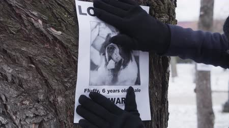 kutya : Close-up of hands in winter gloves hanging missing dog ad on the tree. Saint Bernards owner searching for lost pet. Loss, trouble, problem.