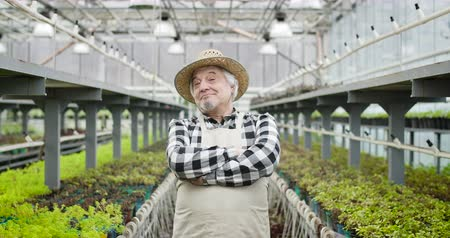 fertilizing : Portrait of cheerful mature Caucasian man in straw hat crossing hands and looking at camera. Senior professional gardener posing in hothouse. Agriculture, cultivation, lifestyle. Cinema 4k ProRes HQ. Stock Footage