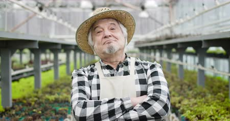 jardinero : Close-up of confident senior Caucasian man with brown eyes in straw hat looking at camera. Portrait of professional gardener crossing hands as posing in glasshouse. Cinema 4k ProRes HQ. Archivo de Video