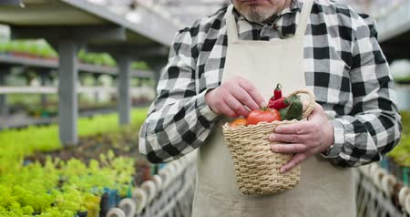 jardinero : Portrait of unrecognizable senior Caucasian man holding basket with organic vegetables. Mature gardener posing with vegetables in greenhouse. Cultivation, agriculture, glasshouse. Cinema 4k ProRes HQ. Archivo de Video