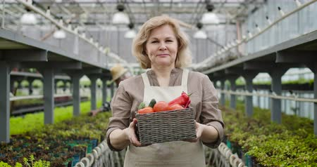 kino : Portrait of mature smiling Caucasian woman coming to camera and showing basket with organic vegetables. Positive female farmer enjoying work in glasshouse. Agriculture, gardening. Cinema 4k ProRes HQ.
