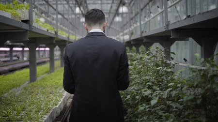 fertilizing : Camera following young Caucasian man in suit walking along rows with plants in greenhouse. Professional auditor inspecting production in glasshouse. Lifestyle, control, business, agriculture.