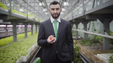 fertilizing : Portrait of smiling Caucasian man in suit throwing up and catching tomato. Confident young businessman posing in his own greenhouse. Agriculture, production of organic vegetarian food, lifestyle. Stock Footage