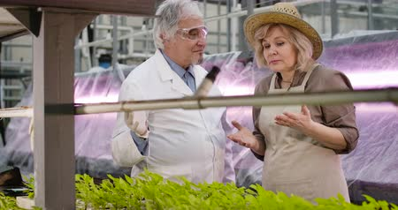 fertilizing : Portrait of senior Caucasian female agronomist talking with professional male scientist in glasshouse. Worried woman explaining problem with plants growth, man calming her. Cinema 4k ProRes HQ. Stock Footage