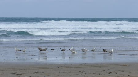 arenque : Seagulls On The Shore Of The Black Sea. Gull Stand On The Beach