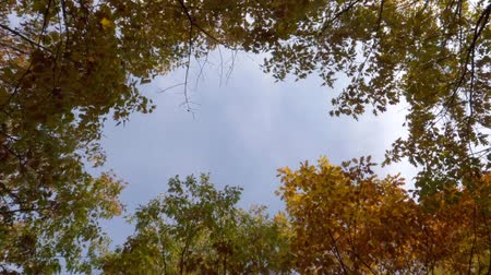 лесное хозяйство : Timelapse Of Autumnal Forest Seen From Below