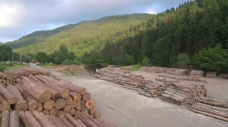 silvicultura : Wide panning shot of wooden logs piled up Stock Footage
