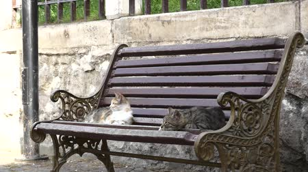 szare tło : Two Beautiful Cats Relaxing On A Bench In The City Wideo