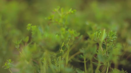stonky : high definition video of a close up view of a green plant