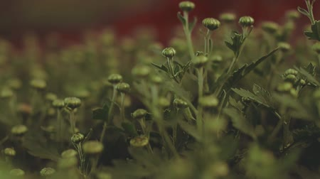 ondulações : Green Plants. Close up view Stock Footage