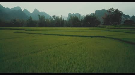 dżungla : Rice Fields With Mountains Around