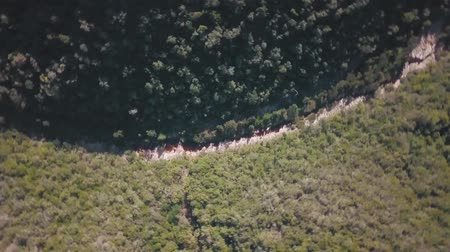 crowded : Birds Eye View Above Lush Dense Forest Green Trees Stock Footage