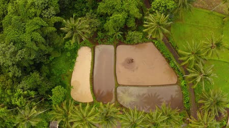 plantaciones : Aerial view of rice terrace field, farmlands, Bali, Indonesia. Rice plantation,terrace, agricultural land of farmers