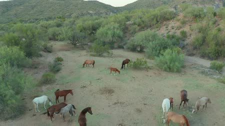 種馬 : Perfect View On The Grazing Horses In The Background Of Mountains. AZ. United States 動画素材