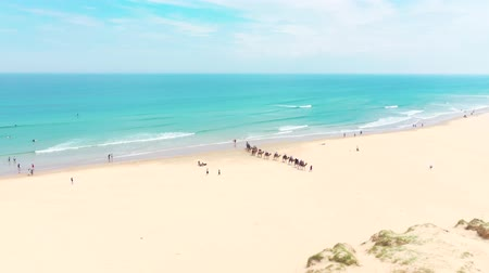 duin : Overhead Aerial Shot Of Tourists Riding Camels along the beach shore. NSW. Australia