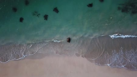australie : Hd Collectio. Baleines et tortues. Images de drone. WASHINGTON. Australie