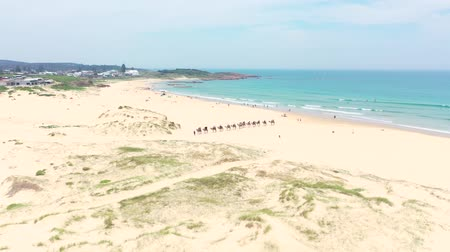 dune : Overhead Aerial Shot Of Tourists Riding Camels. NSW. Australia