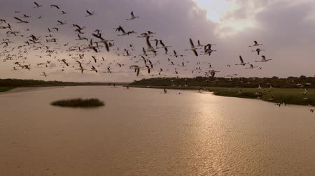 hejno : Flock Of Birds Takes Off From The Water. South Africa