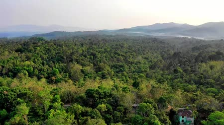 близость : drone flying trough tall trees in tropical rain forest of Banten Indonesia.