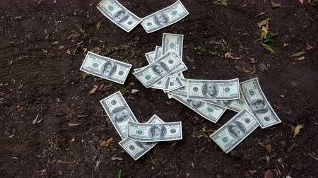 bogaty : Money rain dollars on the nature