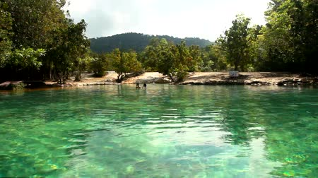 Emerald Pool is unseen in mangrove forest at Krabi in Thailand.