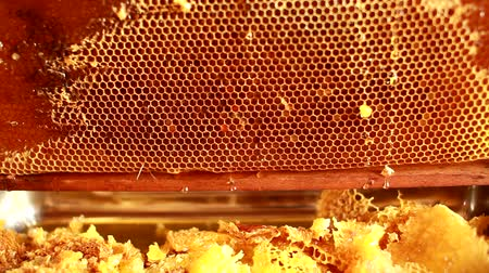 Close up of human hand extracting honey from yellow honeycomb. Beekeeper cuts wax off honeycomb frame with special knife.