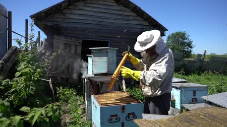 apiary : Beekeeper working collect honey. Beekeeping concept.