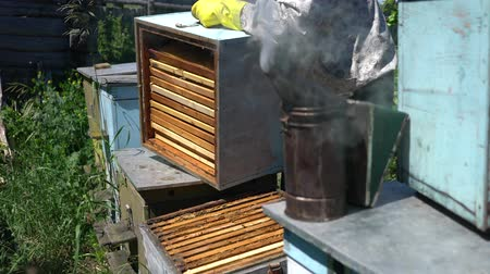 worker bees : Beekeeper working collect honey. Beekeeping concept.