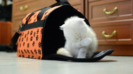 apartamentos : Kitten sitting near the bag carrying the apartment Stock Footage