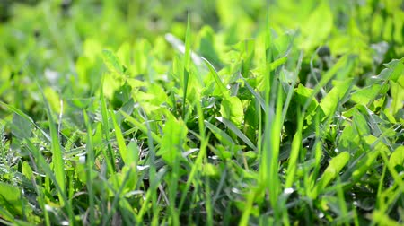 reen : bright spring grass in  wind Stock Footage