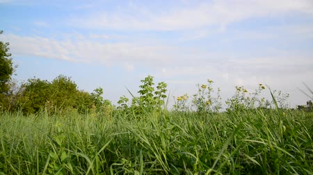 grassplot : Nature of central Russia in summer