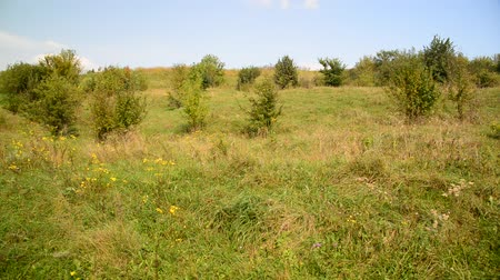 grassplot : Nature of central Russia in August
