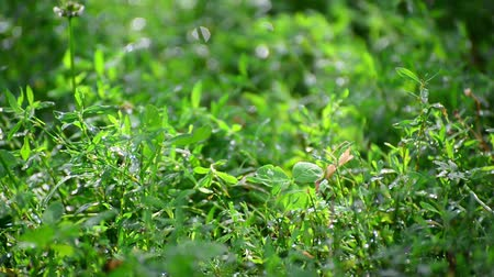 reen : green grass wet from rain
