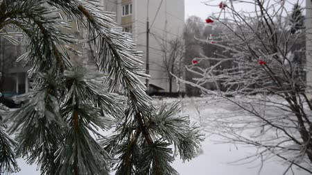 glaciation : Ice-covered trees in Moscow, Russia