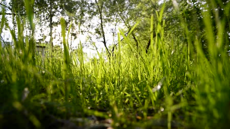 grassplot : View of green grass from below Stock Footage