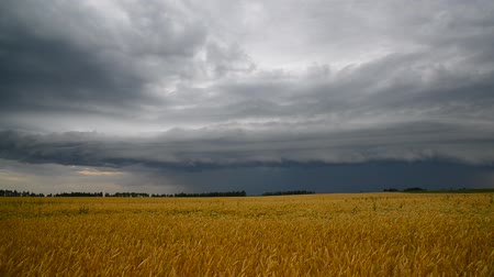 cesty : A stormy front over a ripe wheat field. Russia