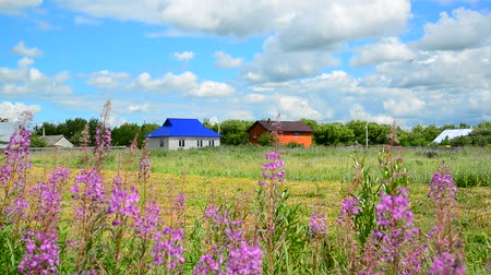 söğüt : Rural houses against background of wildflowers in summer. Russia Stok Video