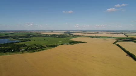 hajtások : Flight over agricultural fields in Russia Stock mozgókép