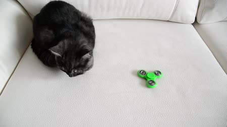 кошачий : Kitten looks at moving spinner