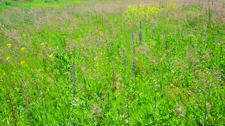 aşağıda : Fragment of wild meadow with flowers and plants