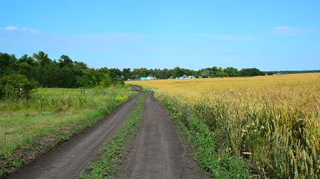 outskirts : Road to rural house along a ripe wheat field, Russia Stock Footage