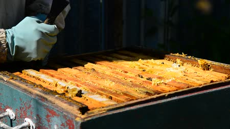 takes : Beekeeper takes out frame with honey from the hive Stock Footage