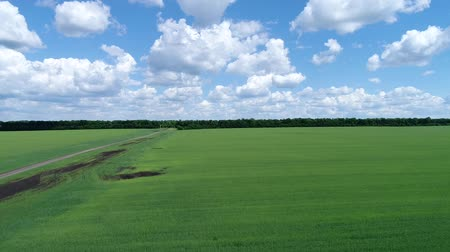 upward : Rise on drone above green cereal field, Russia