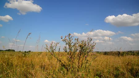 cardo : Steppe landscape In central part of Russia