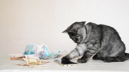 suíças : Gray British kitten playing with smartphone and Russian money