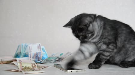 bontkraag : Gray British kitten playing with smartphone and Russian money